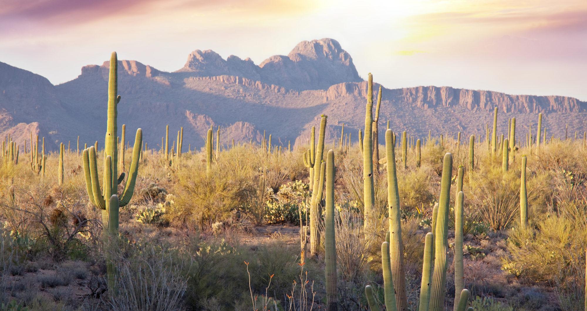 Saguaro Cactus Park